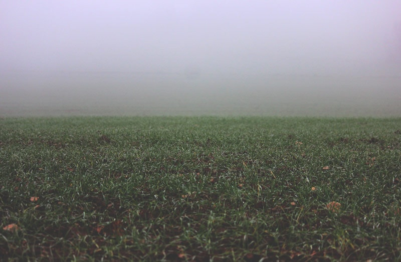 Fog over a lawn.