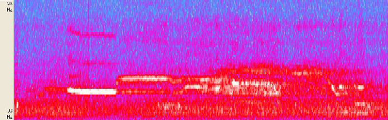 A spectrogram of an American elk bugle.