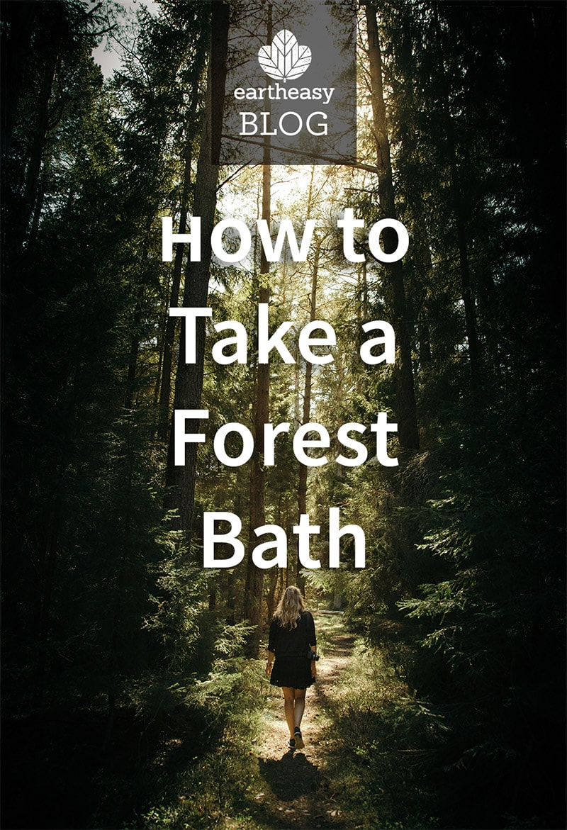 How to take a forest bath