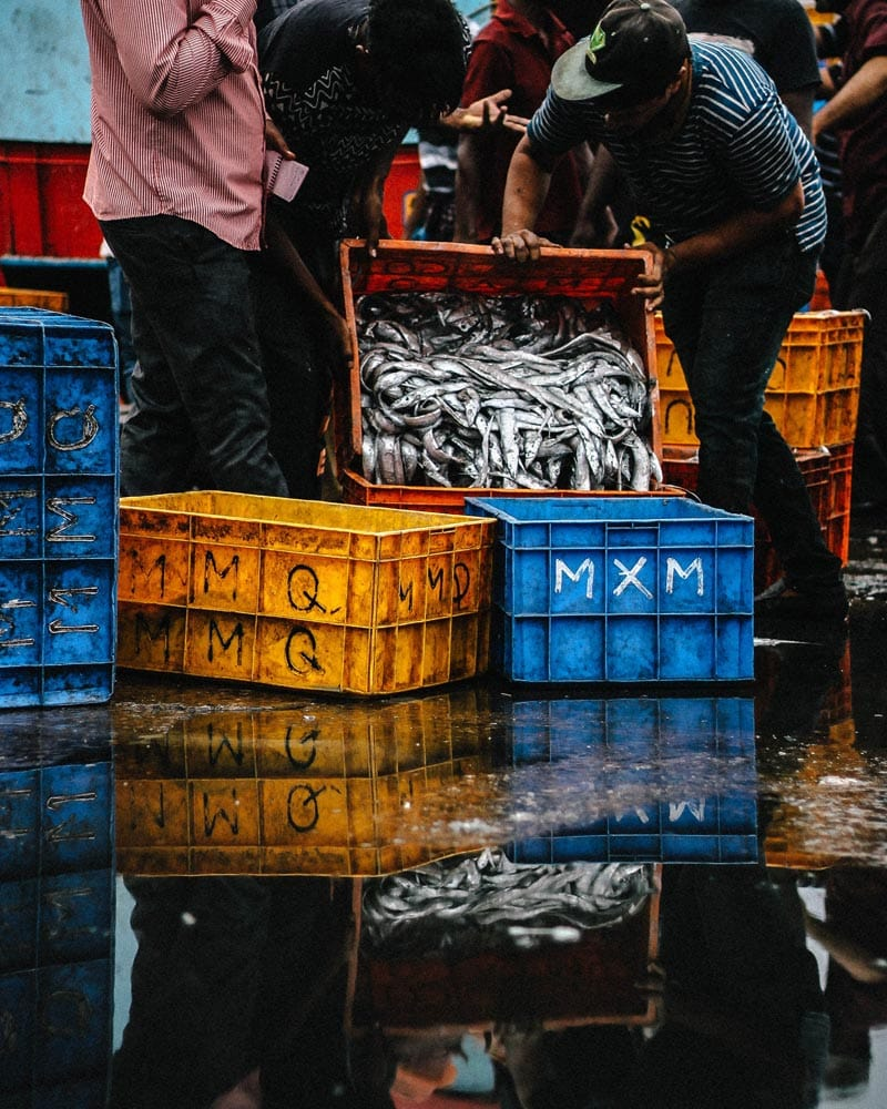 Fisherman transferring fish from one crate to another.