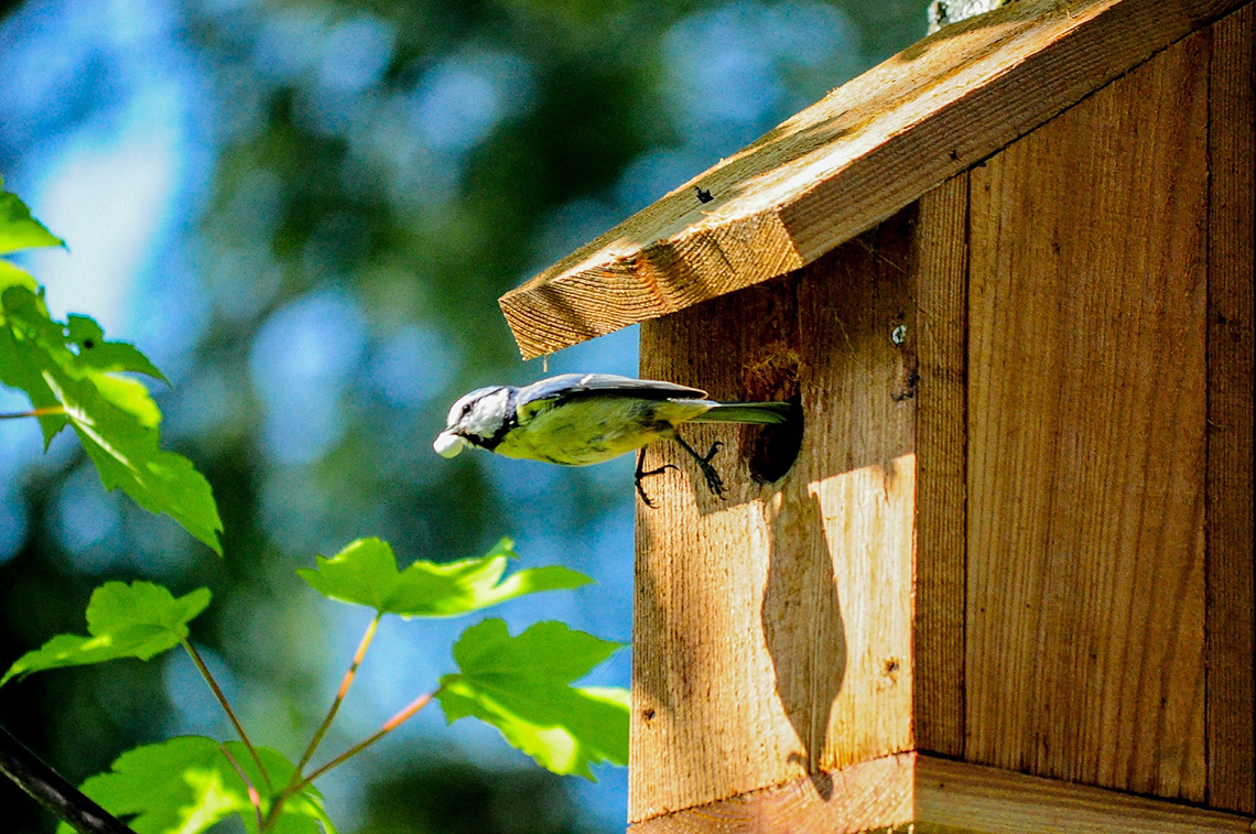 bird leaving a birdhouse