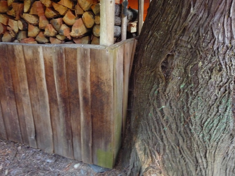 cedar tree and shed