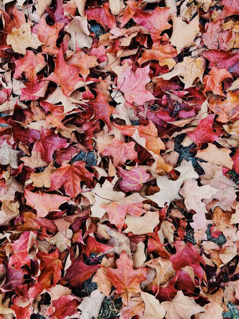 Red autumn leaves on the ground.