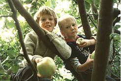 Two brothers in a fruit tree eating apples