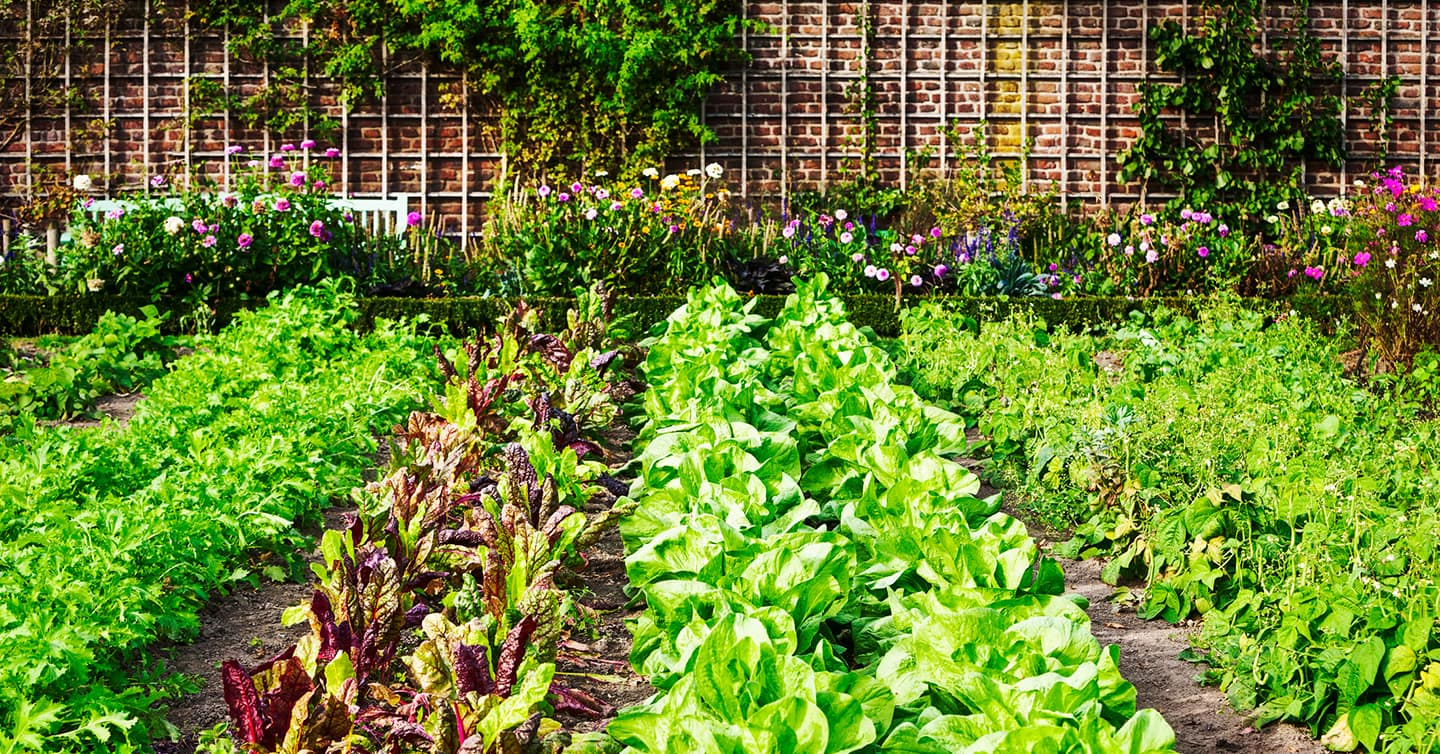 backyard spring garden arranged in rows