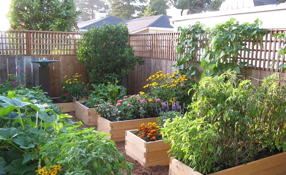 Raised Garden Beds | Eartheasy Guides & Articles