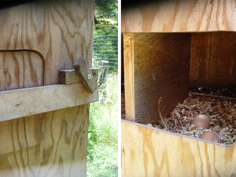 A cutaway door behind the nesting boxes provides access to the eggs from outside the coop.