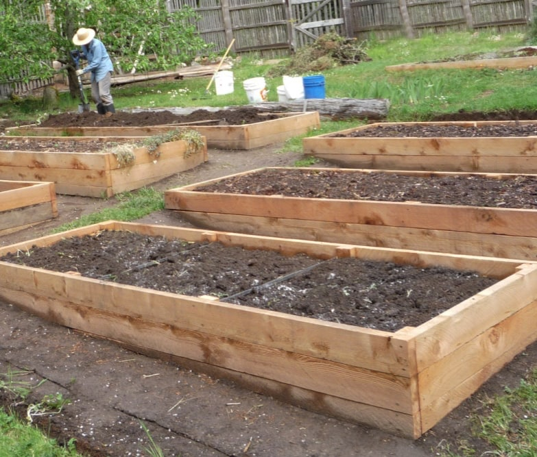 Raised Beds Preparing Your Garden Beds For Spring Eartheasy Guides Articles