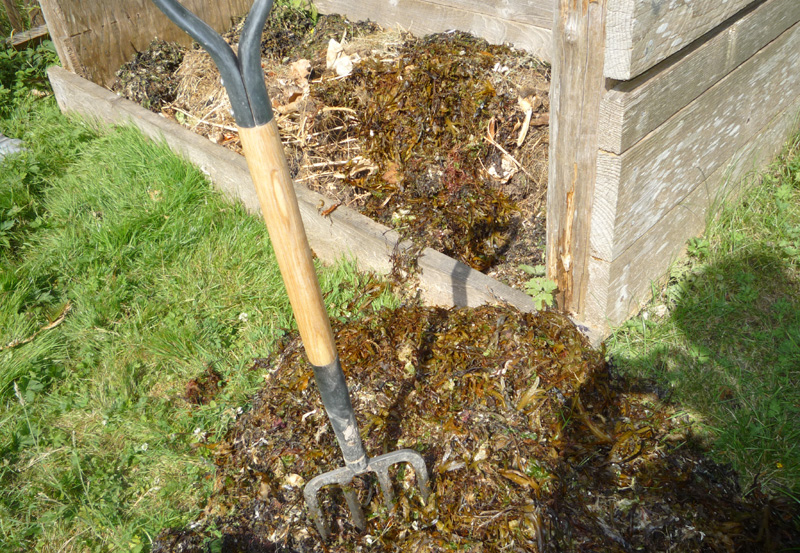 seaweed in compost pile