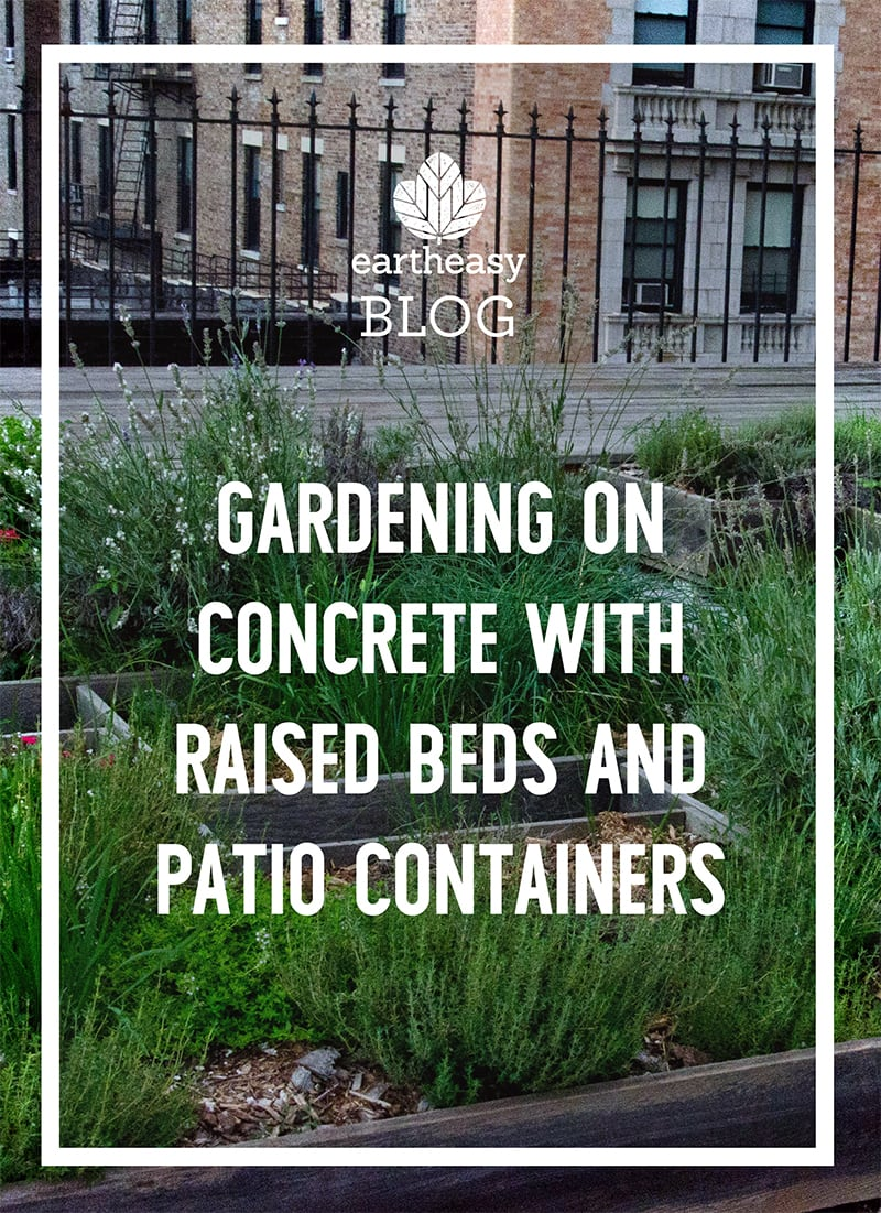 Gardening on Concrete with Raised Beds and Patio Containers
