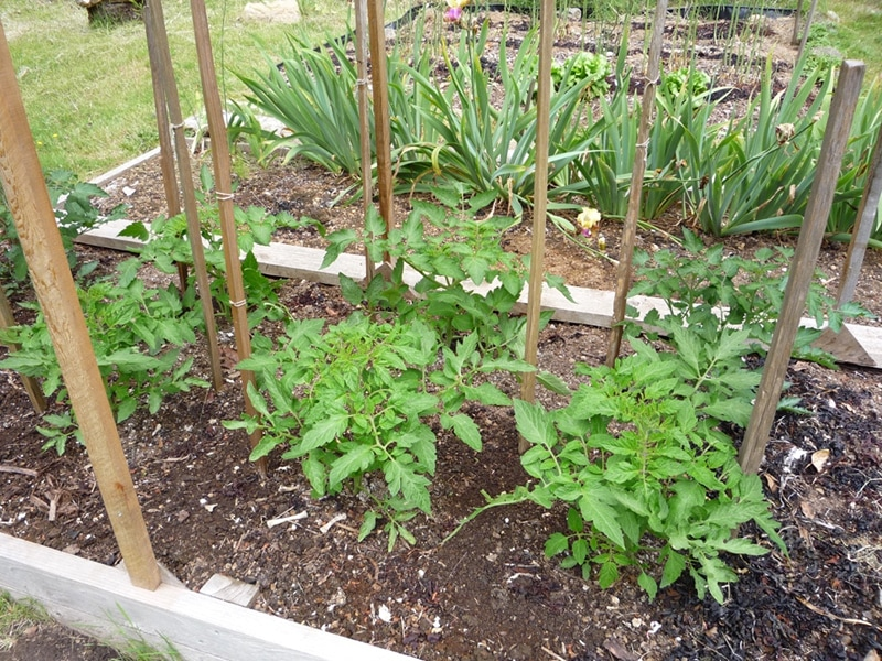 Stake and string trellis
