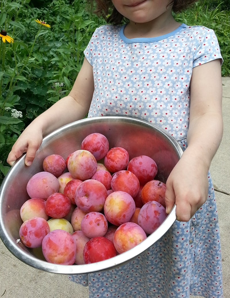 Girl holding bowl of plums