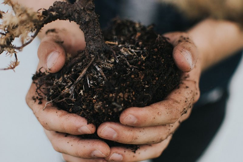what is compost? woman holding brown soil in effort towards ways to save our environment