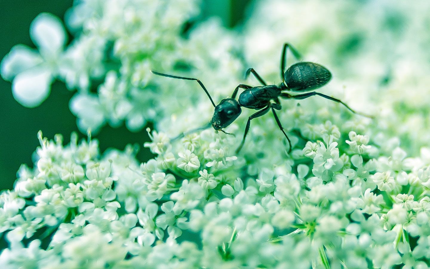 Natural Pest Control | Eartheasy Guides & Articles