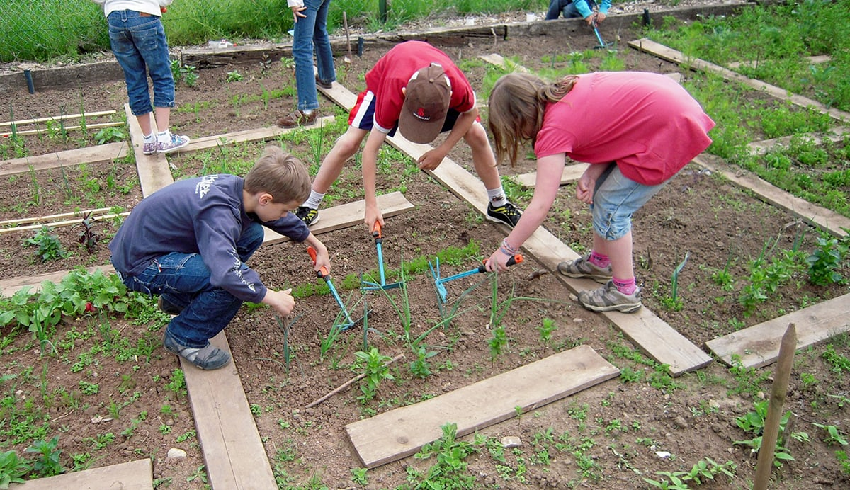 Gardening Group: School Gardens: Can They Make Our Children Smarter