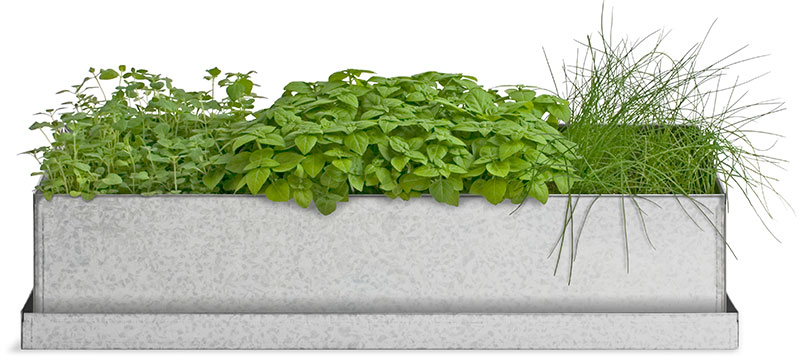 culinary herb grow box in recycled steel.