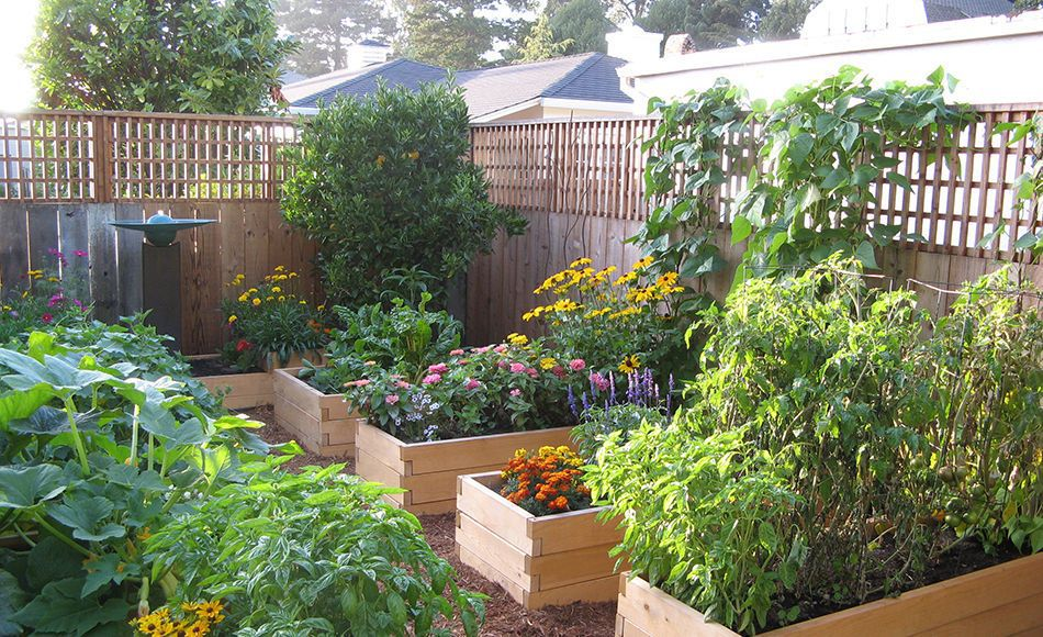 garden beds. natural cedar raised beds garden